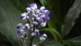Tropical Islands - květ
