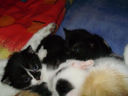 FOTKA - třitýdenní koťátka