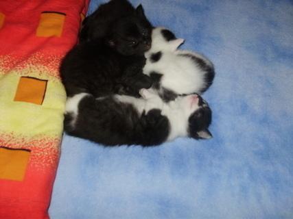 FOTKA - kočičky