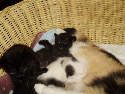 FOTKA - Koťátka tři týdny