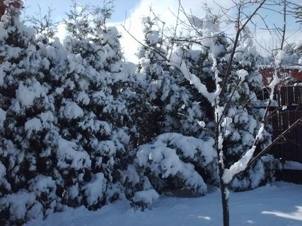 FOTKA - 19.3.2009 - dnešní záhrada  po celonočním sněžení,
