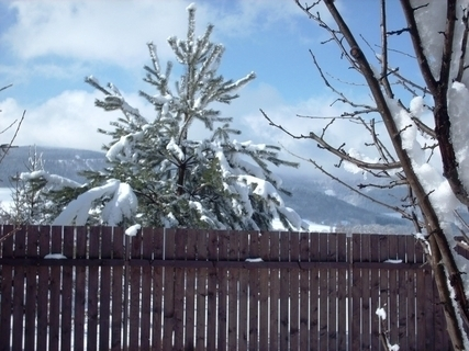 FOTKA - 19.3.2009 - doufam , že  poslední sníh letošní zimy na záhradě!