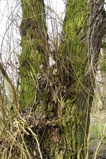 FOTKA - Kmen stromu*