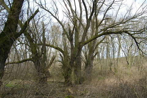 FOTKA - stromy houští