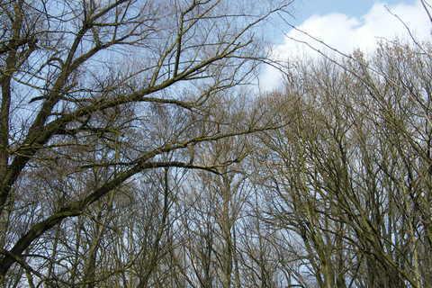 FOTKA - stromy bez listí