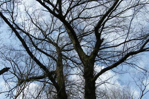 FOTKA - stromy až do nebe