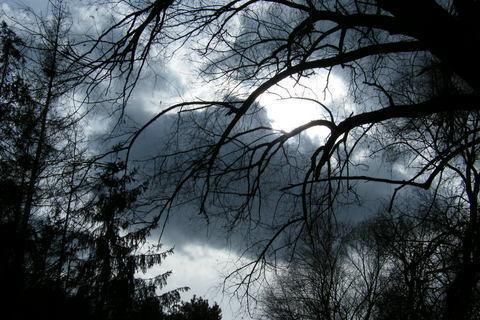 FOTKA - stromy a mračna.