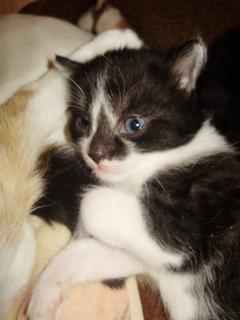FOTKA - Koťátko*