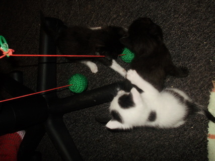 FOTKA - kočičí hraní/