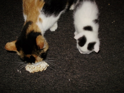 FOTKA - Baštím a drobím zdravý chlebík
