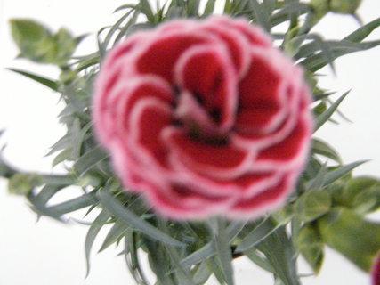 FOTKA - květiny ...