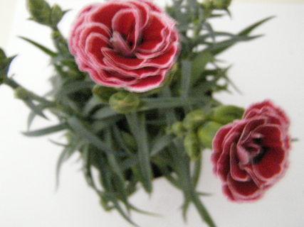 FOTKA - květiny ....
