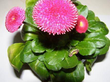 FOTKA - květiny .....