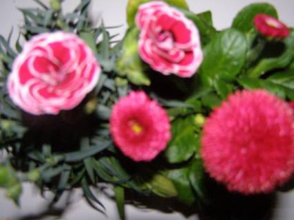 FOTKA - květiny .......