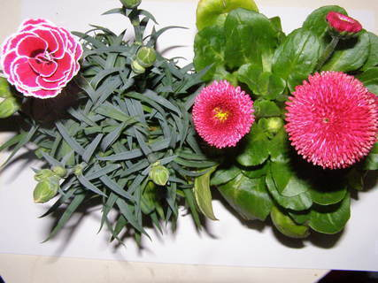FOTKA - květiny ......