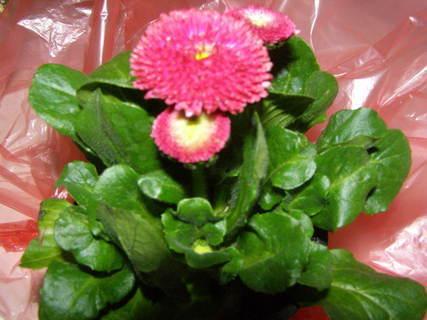 FOTKA - květiny ........