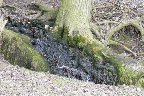 FOTKA - Kořen stromu v potoce