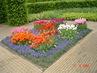 tulipány a modřence v parku