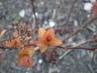 Větvička oranž lístečky