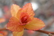 Větvička jako květ