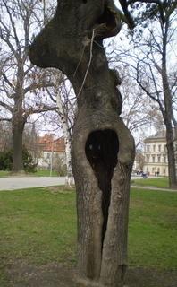 FOTKA - Strom skrýš