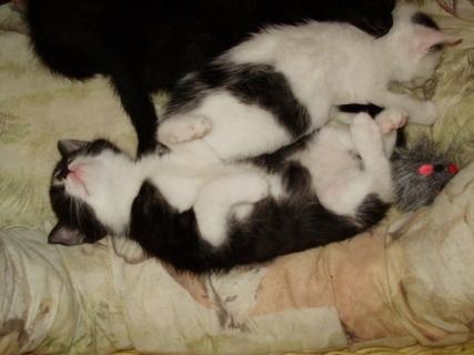 FOTKA - I na zádech se spí dobře