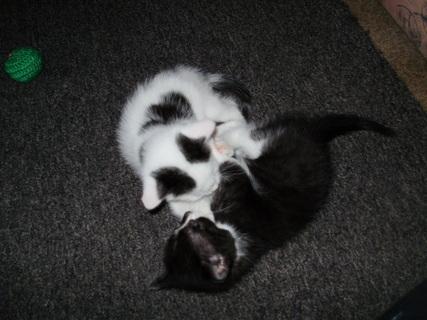FOTKA - Kočkování-