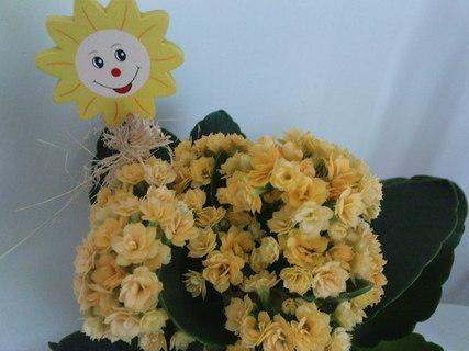 FOTKA - Usměvavá květinka