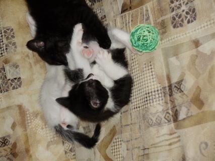 FOTKA - Kočkování v posteli