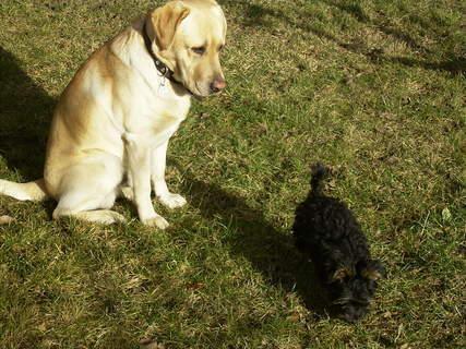 FOTKA - Hezký kontrast našich psíků :)