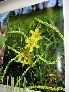 FOTKA - Jarní výstava 2009,,...