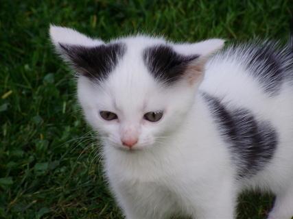 FOTKA - Koťátko- venku