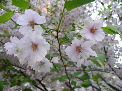 FOTKA - Všude jaro