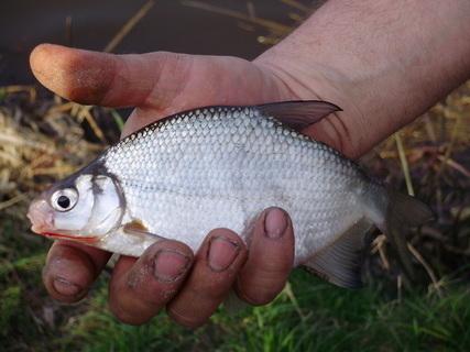 FOTKA - Prvn� leto�n� rybka