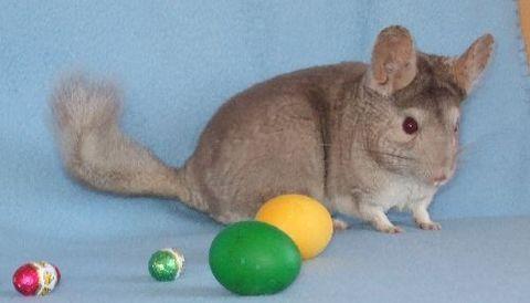 FOTKA - Chiko s vajíčkem