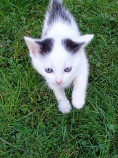 FOTKA - Koťátko na vycházce