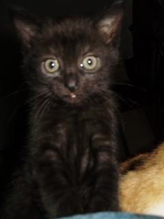 FOTKA - Kotě.-