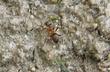 Mravenec na cestě