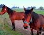Koňská krása
