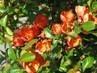 Květy na keříku