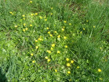 FOTKA - květiny