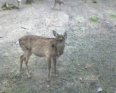 FOTKA - zoo