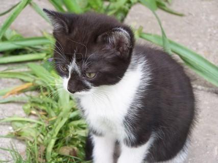 FOTKA - Kotě   =