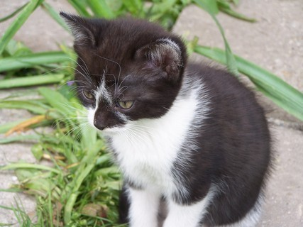 FOTKA - Kot�   =