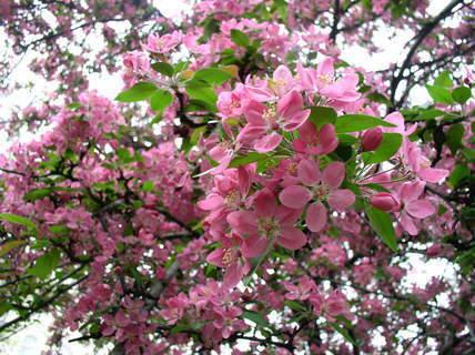 FOTKA - Záplava jarních květů