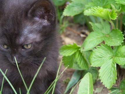 FOTKA - kočička jahodová