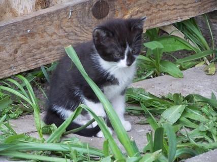 FOTKA - Kotě                       ´´