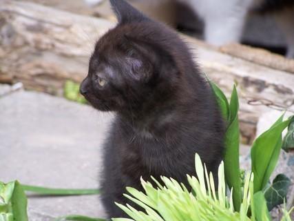 FOTKA - kotě,,