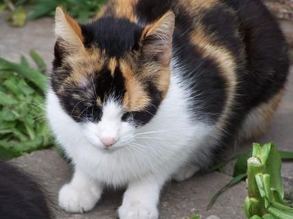 FOTKA - Dorotka hlídá .koťata