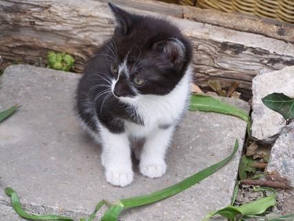 FOTKA - .Kotě